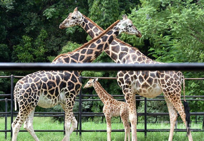بزرگترین باغ وحش های جهان را بشناسید