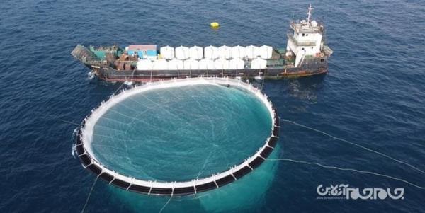 شروع ذخیره سازی بچه ماهی در قفس های پرورش ماهی شرکت آبزیان دشت مروارید
